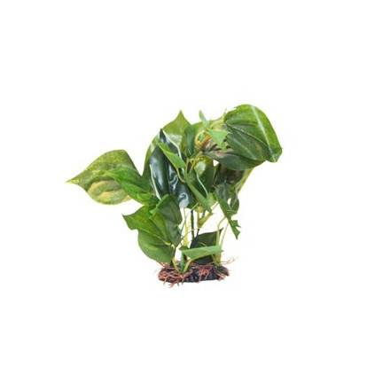 Akvarijní rostlina Premium Plant 311, výška 25 cm