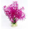 Akvarijní rostlina Standard Plant MIX COLOR, výška 12 cm